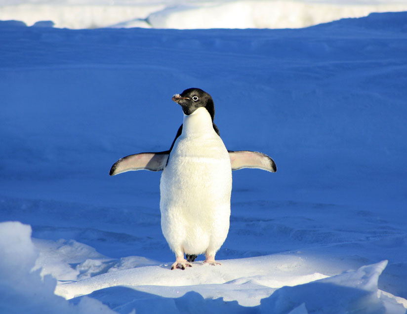 Antarctica — home to ice, penguins, and what else?