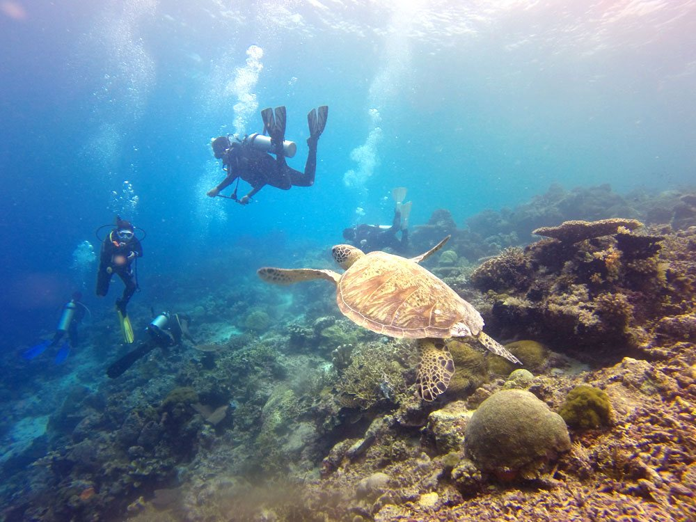 Visitors rush to the Barrier Reef